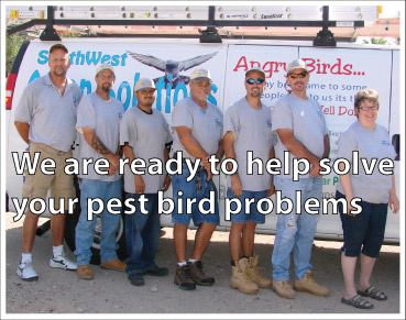Pigeon control company bird control crew from southwest avian solutions